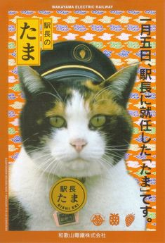 Station Master- Japanese cats are so stylish
