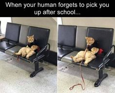 Funny, Memes, Pictures: funny-animals-5-1