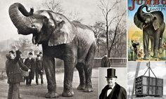 Jumbo the elephant is believed to have been accidentally hit by a train after panicking and running in front of it. But a new book suggests he was tricked into the path of the train by his keeper. Jumbo The Elephant, Work With Animals, Big Star, History Facts, Mother Earth, 21st Century, Vintage Photos, Pop Culture, Tattoo Ideas