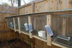 building rabbit cages for meat rabbits - Google Search