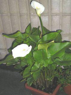 9 Ideas De Arreglo Floral Rosas Arreglo Floral Rosas Arreglos Florales Floristería