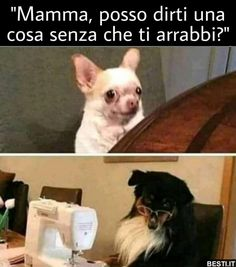 35 ideas for memes mexicanos risa frases Really Funny Memes, Funny Relatable Memes, Funny Jokes, Hilarious, Animal Crossing Memes, Animal Memes, Funny Animals, Memes Humor, Dog Memes