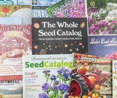 Vegetables to Plant in August for Fall & Winter Harvests | Angie The Freckled Rose Garden Catalogs, Seed Catalogs, Herb Seeds, Garden Seeds, Fall Vegetables To Plant, Veggies, Gardening Vegetables, Bulbs And Seeds, Plant Companies