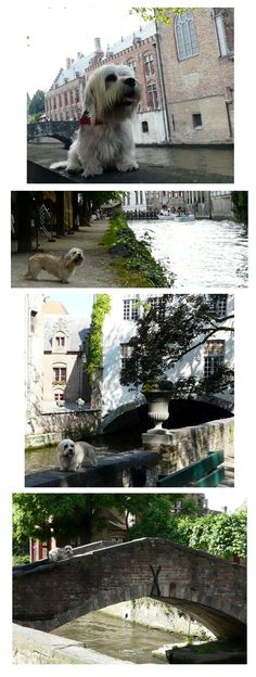 Ziggy had a short break in Brugge, Belgium!