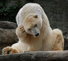 So many things to ponder. I know that feeling, bear bros.