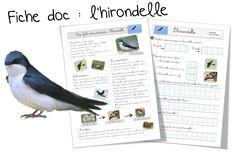 Documentaires - Bout de gomme L'Hirondelle et d'autres fiches lecture et exercices