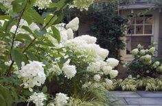 25  Awesome White Garden Ideas With White Flower Collection in Your Garden