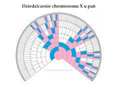 Genealogia genetyczna: Chromosom X - genealogiczne błogosławieństwo czy przekleństwo?
