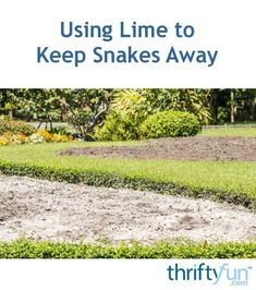 A mixture of hydrogenated lime and granulated sulfur may keep snakes away. Mothballs should not be used as pest control. It is harmful to humans and pets, and is not effective at deterring snakes. Organic Soil, Organic Gardening, Organic Farming, Gardening Tips, Keep Snakes Away, Garden Snakes, Kinds Of Snakes, Natural Pesticides, Beneficial Insects