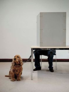 A dog waits while its owner votes for regional elections of North Rhine-Westphalia in Duesseldorf, western Germany on May 13, 2012. Photo: AFP