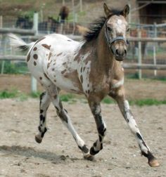 My imaginary horse that I galloped around on through life looked exactly like this in my head
