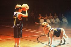 Air Bud was released on August 1, 1997 and immediately became a family classic, winning over the hearts of its audience.