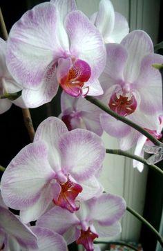 Garden Decoration | Orchid Flowers