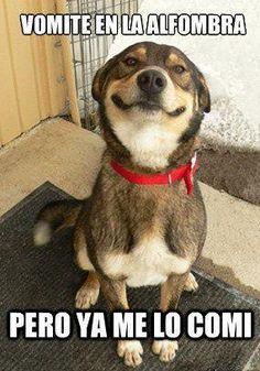 Este perrito es de lo más gracioso y tierno!