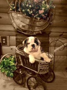 garden pup