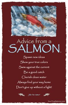 Advice from a Salmon Frameable Art Card – Your True Nature, Inc. Advice Quotes, Best Quotes, Life Quotes, Advice Cards, Living Quotes, Wisdom Quotes, Animal Spirit Guides, True Nature, Animal Totems
