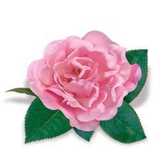 Róża okrywowa The Fairy - Rosa
