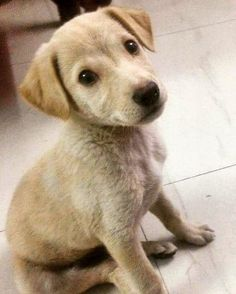 Hello there! This is Walnut two-month-old pup Rescued three days ago by Masha. #Delhi He had fever but with good medical care and love he is back to health! Walnut needs a loving home He will bring a lot of happiness and joy to whoever adopts him. Help Walnut find his humans :)