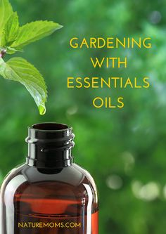 Share Tweet Pin Mail Essential oils play a big role in organic gardening. Various types of oils help to repel insects and kill invasive ...