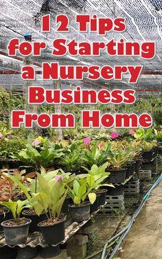 12 Tips for Starting a Nursery Business from Home - Garden Small Garden Nursery, Flower Nursery, Plant Nursery, Peace Lily, Organic Gardening, Gardening Tips, Farm Business, Business Ideas, Tips
