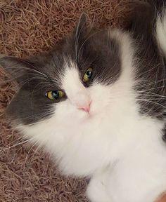 Time to sleep? Oh no - let's play  #kissa #cat #catlovers #catsaturday #petlovers #catstagram #catsofinstagram #micuthecat #lifestyleblogger #nelkytplusblogit #åblogit #ladyofthemess