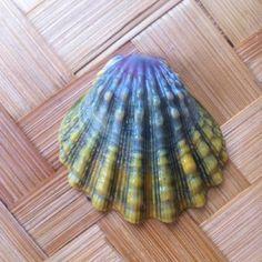 Moonrise shell Sea Crafts, Rock Decor, Tiny Treasures, Shell Art, Colorful Birds, Rocks And Minerals, Kauai, Sea Creatures, Sea Glass