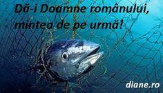 diane.ro: Rumi: Povestea celor trei peşti