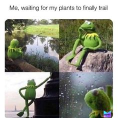 If you have watched the very last episode of a series . & Funny pictures, sayings, jokes, really funny The post If you are the very last episode of a seri & appeared first on Kermit the Frog Memes. Nfl Memes, Football Memes, Funny Memes, Soccer Memes, 5sos Memes, Sports Memes, Funniest Memes, Funny Quotes, Facebook Humor