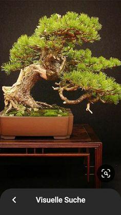 Bonsai Styles, Culture, Garden, Plants, Photography, Garten, Photograph, Lawn And Garden, Fotografie
