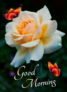 Very Good Morning Images, Good Morning Cards, Good Morning Images Download, Good Morning Picture, Good Morning Messages, Good Morning Greetings, Good Night Image, Good Morning Wishes, Morning Msg