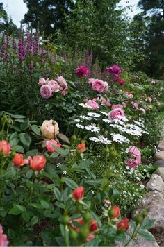 Garden compositions with roses and combinations of varieties More Great pin! For Oahu architectural design visit ownerbuil Farm Gardens, Outdoor Gardens, Cottage Garden Design, Flower Garden Design, Peonies Garden, Garden Roses, Garden Borders, Dream Garden, Garden Planning