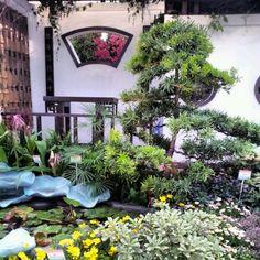 Chinese herbal garden