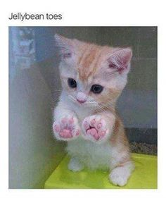 27 great cat pictures when life is shitty again - And this tiny kitten with the perfect paws. And this tiny kitten with the perfect paws. And this ti - Cute Cats And Kittens, I Love Cats, Kitty Cats, Adorable Kittens, Cat Paws, Ragdoll Kittens, Kittens Meowing, Dog Cat, Kittens Cutest Baby