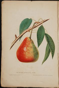 HOVEY, Charles Mason (1810-1887) [The Fruits of America, containing a selection of all the choicest varieties cultivated in the United States