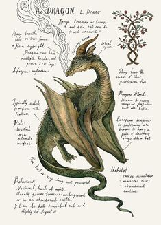 Sketch Book Étude naturel Dragon impression 5 x 7 po. - Printed on Natural Savoy Cotton Paper, this print features one of my Natural Science journal entries of the Dragon. Originally drawn in watercolor and ink. Dimensions: 5 x Mythical Creatures Art, Mythological Creatures, Magical Creatures, Fantasy Creatures, Watercolor And Ink, Watercolor Flowers, Images Harry Potter, Arte Sketchbook, Dragon Print