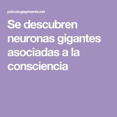 Se descubren neuronas gigantes asociadas a la consciencia
