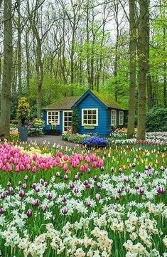 Tiny blue cottage among the trees and flowers.