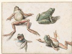 Jacob de Gheyn II (1565-1629 pittore e incisore olandese), Quattro studi di una rana.