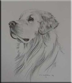 Find the desired and make your own gallery using pin. Drawn golden retriever pencil drawing - pin to your gallery. Explore what was found for the drawn golden retriever pencil drawing Dog Drawing Tutorial, Pencil Drawing Tutorials, Pencil Art Drawings, Art Drawings Sketches, Drawing Tips, Drawing Drawing, Drawing Ideas, Sketches Of Dogs, Dog Pencil Drawing