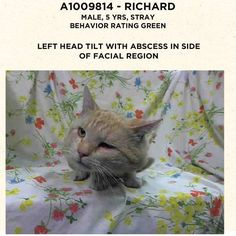 PULLED BY ANJELLICLE - STILL!! 08/14/14 Please Adopt, or Help poor Richard. AC&C NYC - Manhattan Center A1009814 - http://www.petharbor.com/pet.asp?uaid=NWYK.A1009814 MALE, ORG TABBY / WHITE, DOMESTIC, 5 yrs- STRAY WAIT, NO HOLD INJ SEVERE has a L head tilt with abscess within the side of facial region