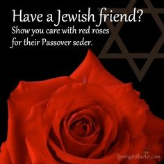 Give Red Passover Spray Roses $59.99