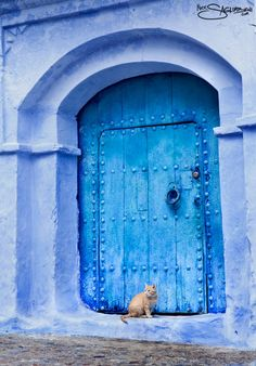 Old Doors, Windows And Doors, Sunflower Wallpaper, Kinds Of Cats, Blue Art, Beautiful Buildings, Cat Life, Sea Colour, Shades Of Blue
