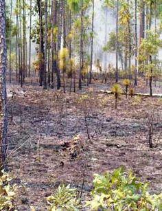 Upland Ecosystem Restoration Project (UERP)