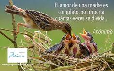 ¡Felicidades a todas las mamás! #DiadelaMadre #mamá #amor #hijos #padres #familia #actitud #bienestar #salud #vida #preguntaleamonica