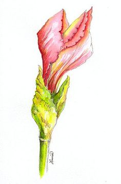 """IRIS BUD...""""BEVERLY  SILLS''  This bud's for you ''Bubbles''...:)"""