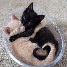 We hit 1 million likes on Facebook today! http://facebook.com/tinykittens #catsofinstagram #cats