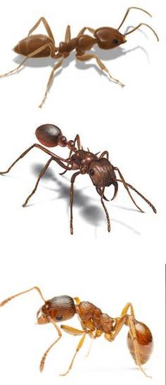 A friend asked this question today Do ants sleep? Yes, they do