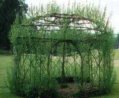 A summerhouse created out of living willow. Maybe not for winter use, but imagine sitting there on a hot day, feeling creative?