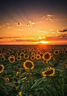 Beautiful sunset ~