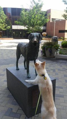 She didn't understand why the other dog wouldn't say hi to her via /r/aww http://ift.tt/2uE1yU8